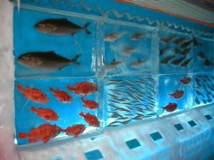 Рыбы во льду замороженного аквариума